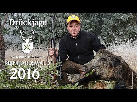 Drückjagd Reinhardswald 2016 Hessen - K&K Premium Jagd