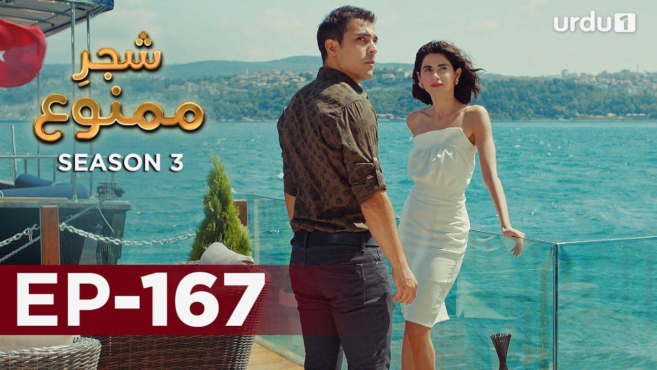 Shajar-e-Mamnu | Episode 167 | Turkish Drama  | Forbidden Fruit | Urdu Dubbing | 30 July 2021