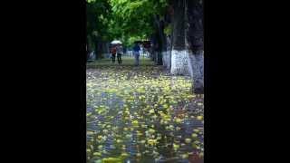 Chiều mưa Hà Nội - Lam Trường