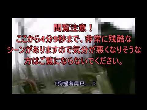 【閲覧注意!残酷映像あり】中国北京近郊の通州の犬肉販売調査、犬ドロボウとの関係