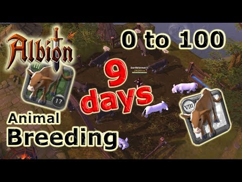 0 To 100 Animal Breeding In 9 DAYS! (Farming) Guide | Albion Online