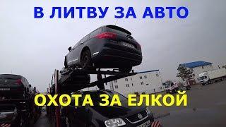 В Литву за авто. Охота на елку. часть 2