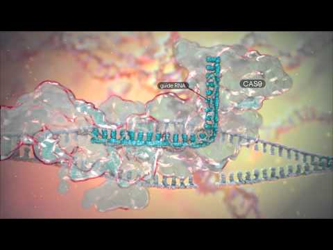CRISPR technology for genome editing