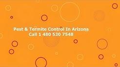 Pest Control Litchfield Park AZ Cheap Termite Removal In Arizona