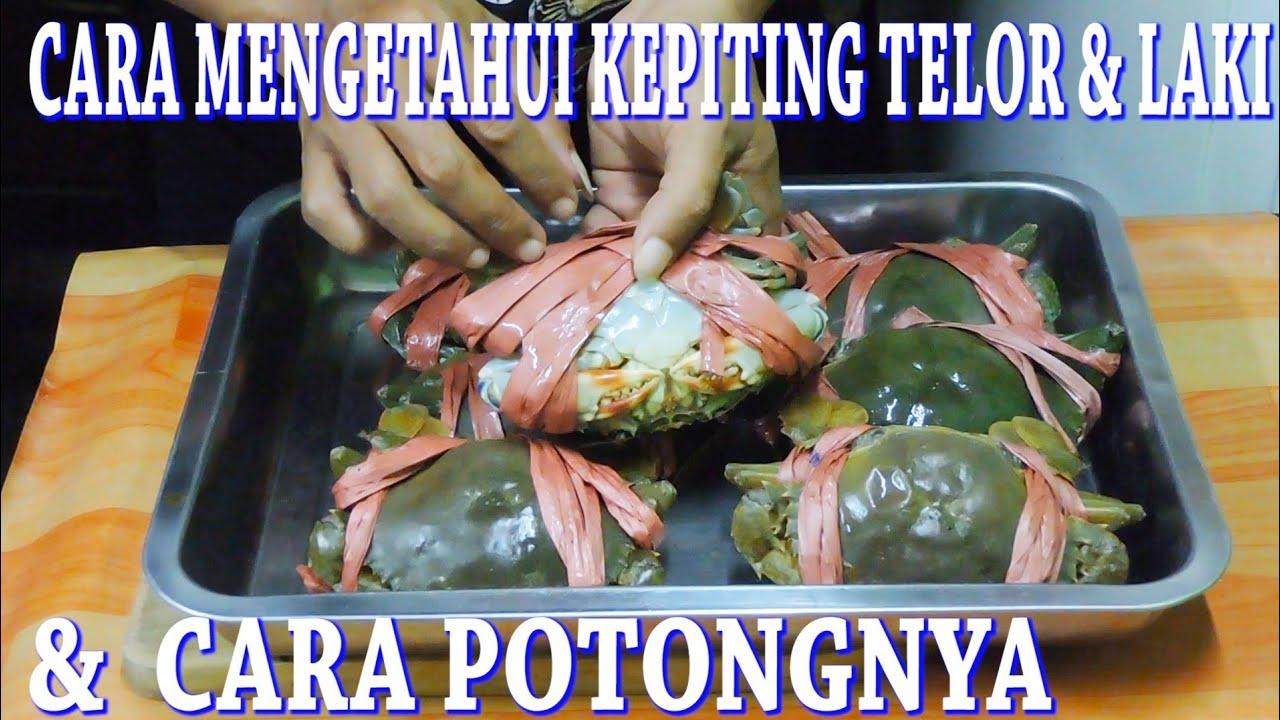 Cara Mengetahui Kepiting Telor Laki Serta Cara Potongnya Youtube