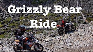 Grizzly Bear on Koko Claim - T7s and 890-ADV Rally