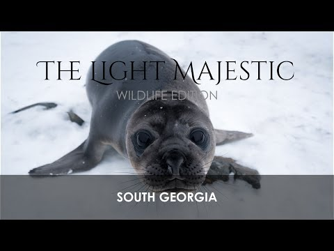 South Georgia - Wildlife Edition