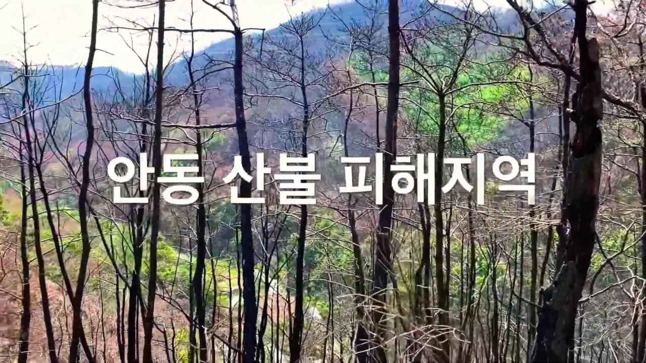 안동 산불 피해지역 | 검암리 모운사 | 대애실마을