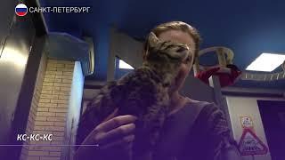 Акция по раздаче эрмитажных котов прошла в Петербурге