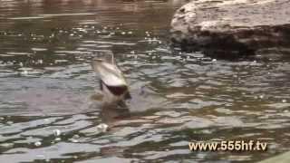 Рыбалка. На Плато Путорана.(На сайте www.555hf.tv (интернет-телевидение) Вы можете посмотреть эту передачу полностью онлайн бесплатно. Смотр..., 2013-07-03T06:50:36.000Z)