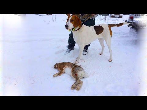 Охота #72 первый заяц из под гончей