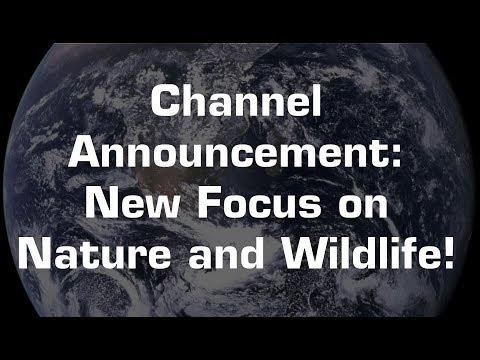 Channel Announcement: A New Focus on Nature and Wildlife!