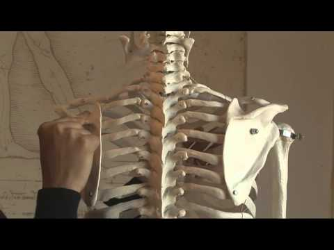 Scapula Stability in Pilates