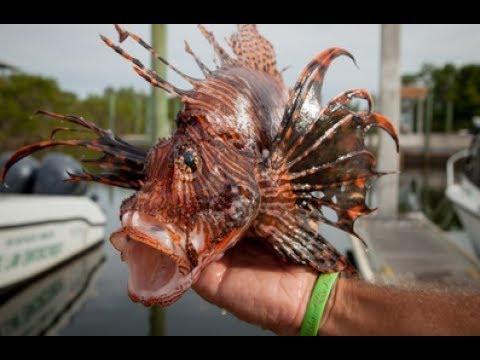 العلماء يحذرون من أسماك تغزو البحر المتوسط .. اذا رايتها اهرب ونجو بحياتك
