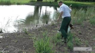 Tony Price Solo Cocker Stud Dog Tawnyhill Gundogs