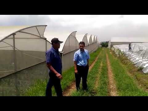 AMAZING FARM LEMBANG