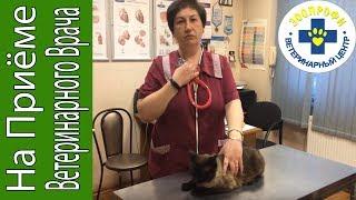 Простуда у Кошек.  Лечение Пневмонии