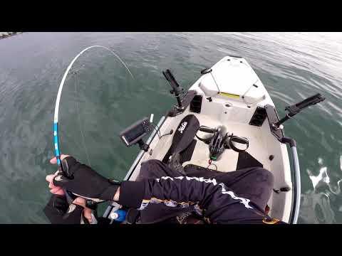 Kayak Fishing For Australian Salmon | Hobie Pro Angler Melbourne