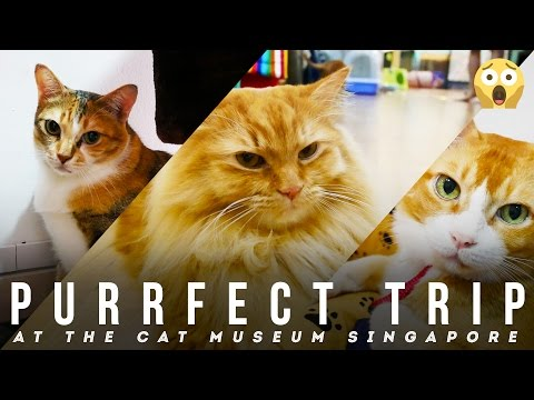 Purrfect Trip at The Cat Museum Singapore: For Traveler Who Love a Cat | Broewnis Travel