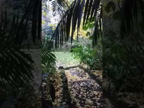 Love Azores - TerraNostra Garden
