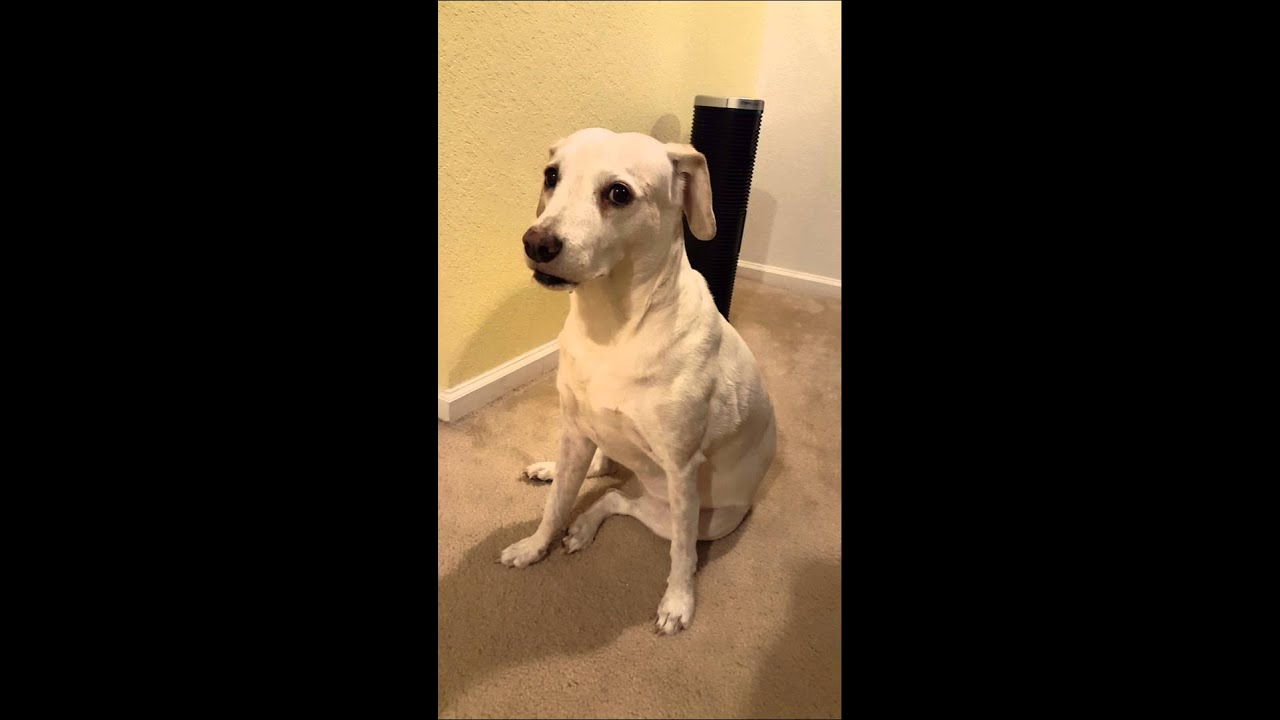 how to make my dog stop barking at people