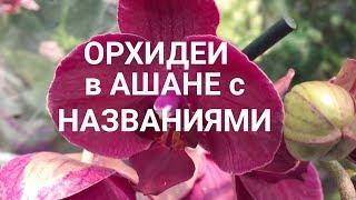 обзор ОРХИДЕИ с НАЗВАНИЯМИ в АШАНЕ и ГОРШКИ в октябре