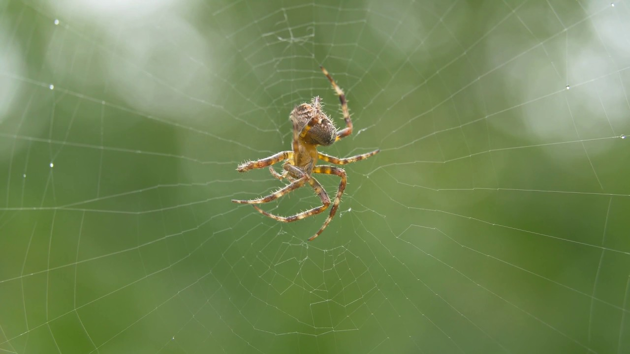бронируемые паук картинки анимация сам