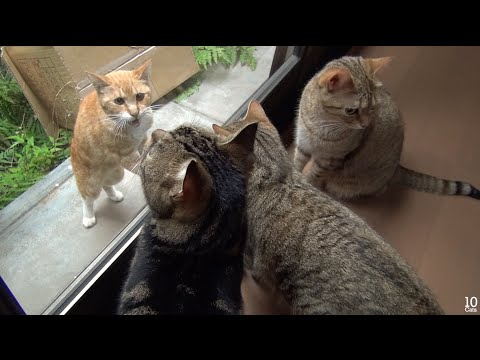 Count Me In! Cats will accept Stray Cat. 仲間に入れて! 野良猫を受け入れる猫たち