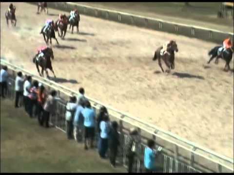 ม้าแข่งสนามเชียงใหม่ 1 มีค.57 รวม