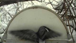 Winter Bird Feeder in Estonia