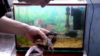 Как подготовить аквариум для размножения неонов