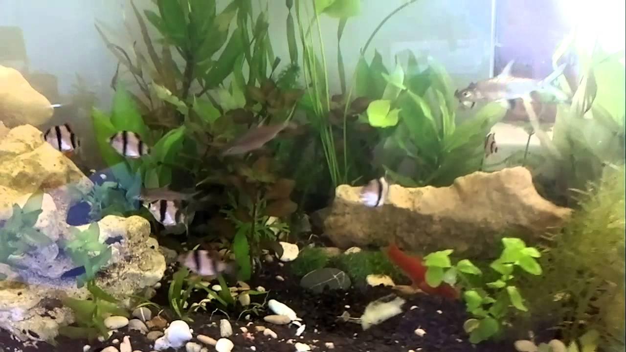 Как сделать воду в аквариуме кристально чистой фото 308