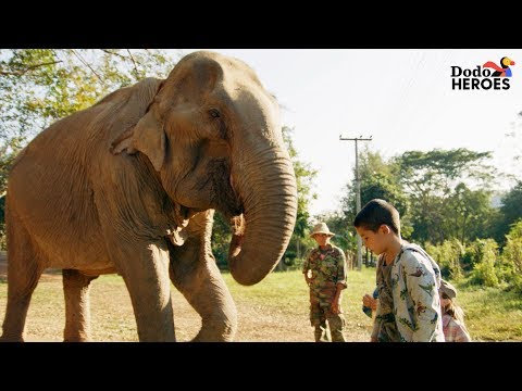 Elephant Who Spent Her Life In Chains Gets A Second Chance  Dodo Heroes