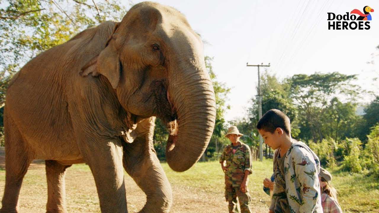 Elephant Who Spent Her Life In Chains Gets A Second Chance | Dodo Heroes