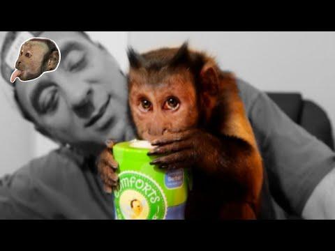 Monkey Loves Blueberry Puffs!