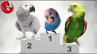 Mistrzowie nad mistrzami - najlepiej gadające papugi Mistrzostw Polski Ptaków Gadających