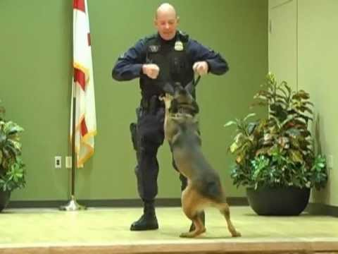 Prince George's County (Maryland) Canine Unit Demonstration