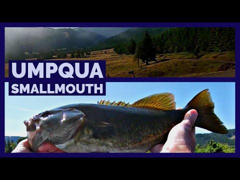 Fun Smallmouth Bass Fishing On The Umpqua