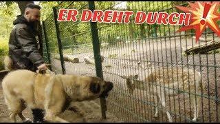 RIESEN KANGAL reagiert auf ALLE TIERE im Tierpark!! 😱💥