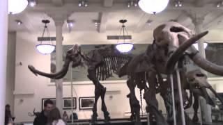 """Музей естественной истории. 1 часть - """"Вымершие животные"""""""