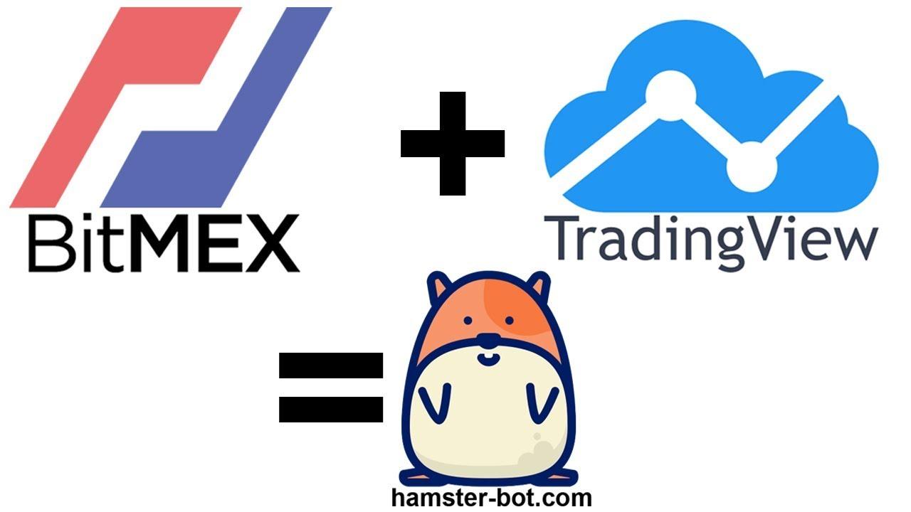 BitMEX hamster-bot quick start guide