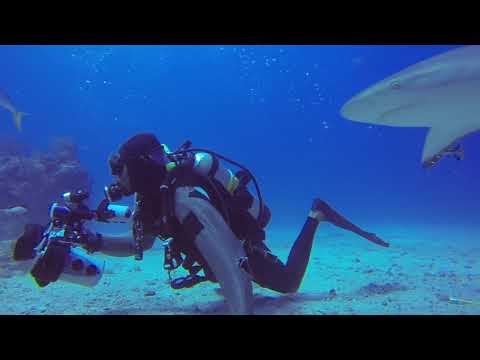 Shark Reef - Shark Dive - Sint Maarten - Ocean Explorer