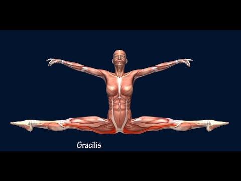 Side Split Straddle Dance Muscle Break Down EasyFlexibility