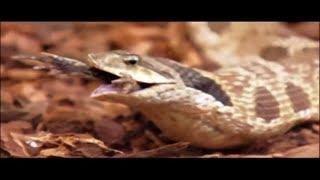 Wild Animals World Documentary Film Мир Диких Животных Документальный Фильм