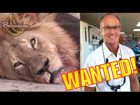Cecil the Lion Killed by U.S. Dentist Walter Palmer (WANTED!)