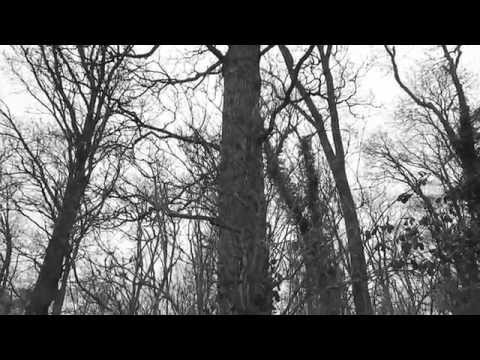 Pale Heart - Stay High Music Video