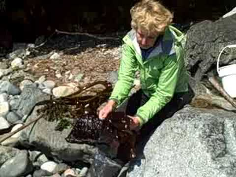 The Seaweed Lady on Sea Lettuce, or Ulva Lactuca