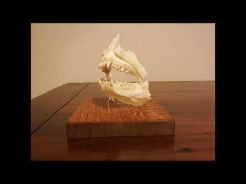Snapper Jaw Mount