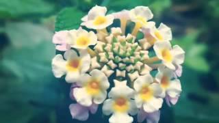 Monita Tahalea Bisu (album: Dandelion)