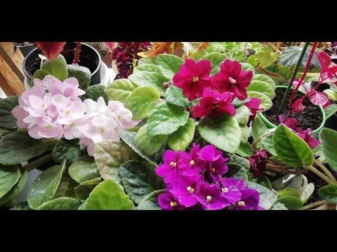 Цветочный рай на подоконнике